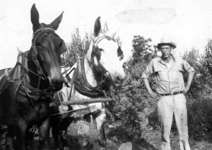Raymond Hemperley with mules, Joe and Jeff