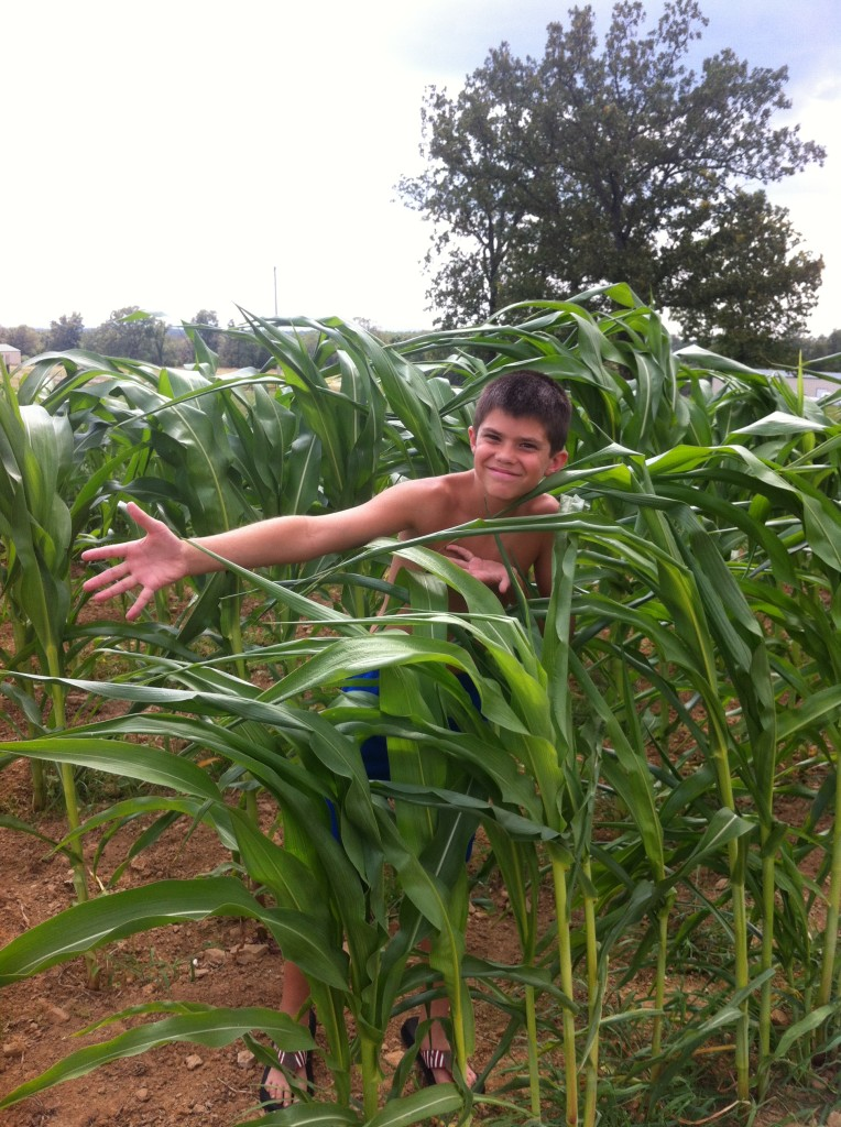 Knucklehead in the corn