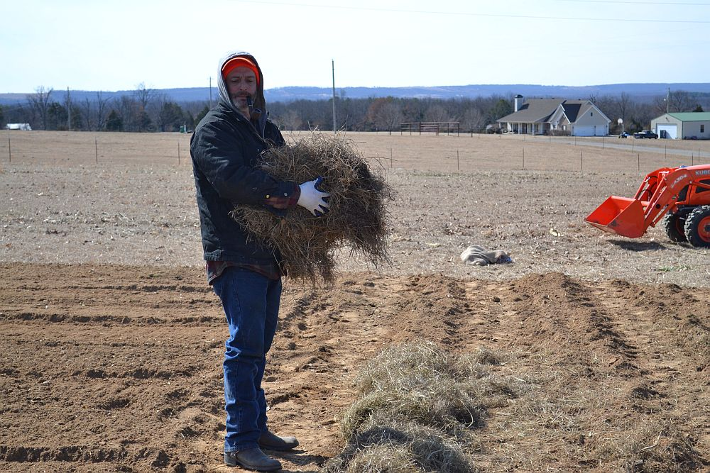 Hay to protect our seeds from a hard freeze.